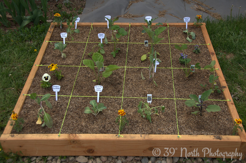 More broccoli, cauliflower, eggplant, cabbage, strawberries