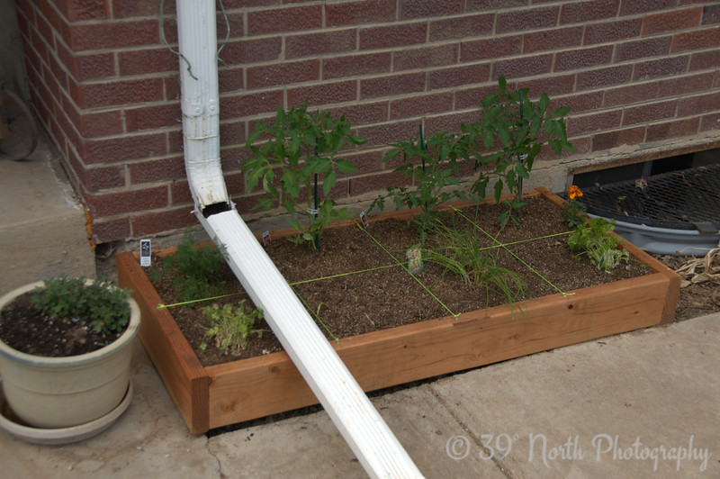 Tomatoes (3 kinds), dill, cilantro, garlic, chives, parsley