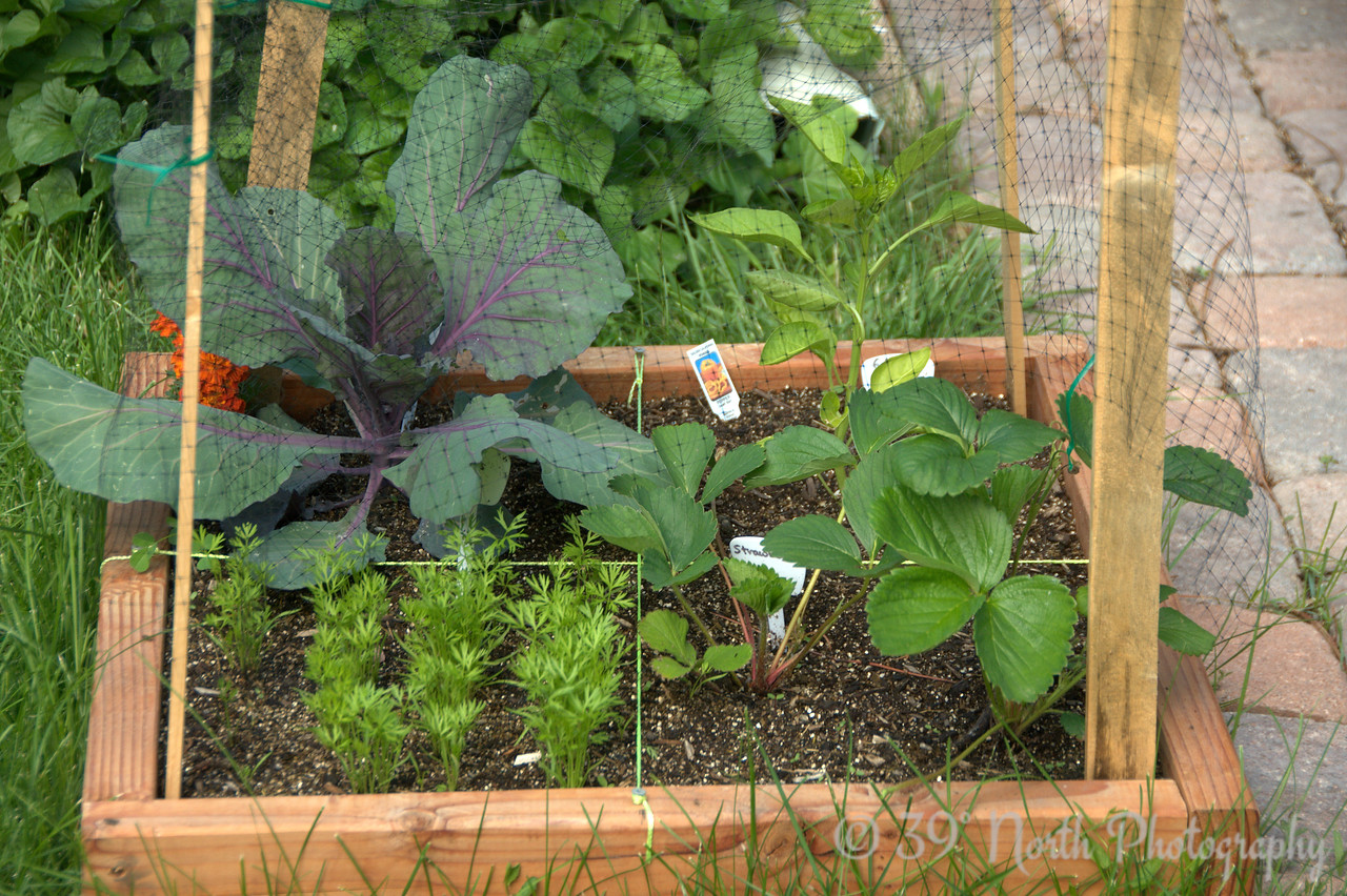 Giovanny & Ryan's garden @ day 30