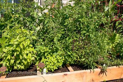 Many herbs.