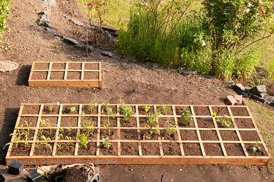 Freshly planted tomatoes, zucchini, acorn squash, Japanese eggplant, English thyme, basil, tarragon, sage, min, Carmen hybrid pepper and California Wonder pepper.