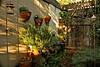 Winter Garden in San Dimas