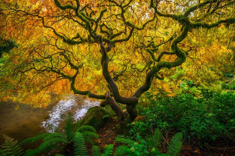 Kubota Autumn's Green and Gold