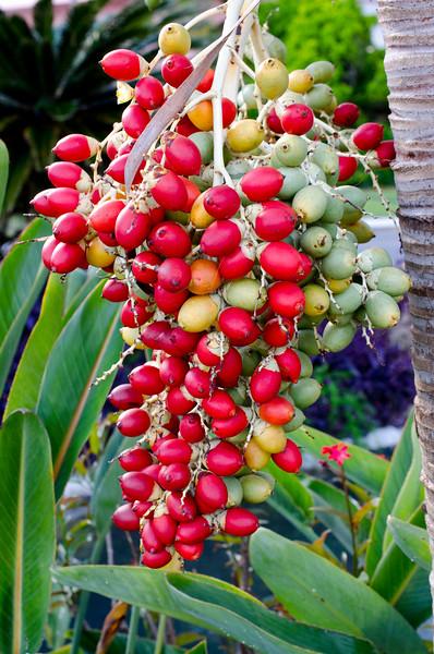 Bermuda Flowers BLS8415