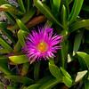 Bermuda Flowers BLS8771