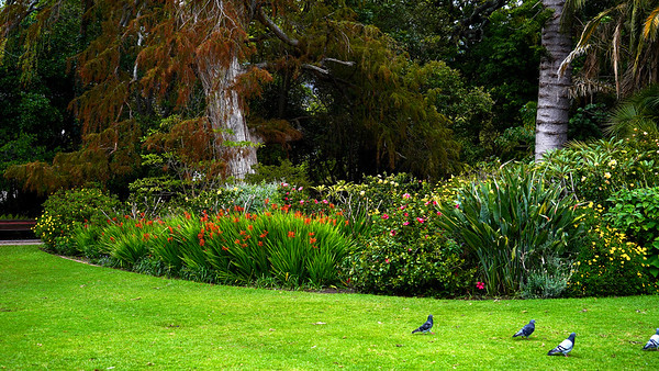 The Company's Garden, Cape Town