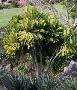 Botanical Gardens Manurewa Auckland New Zealand - 21 May 2006