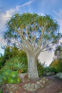 Botanic Gardens Manurewa Auckland New Zealand - 21 May 2006