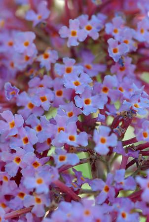 Carl S. English, Jr. Botanical Garden