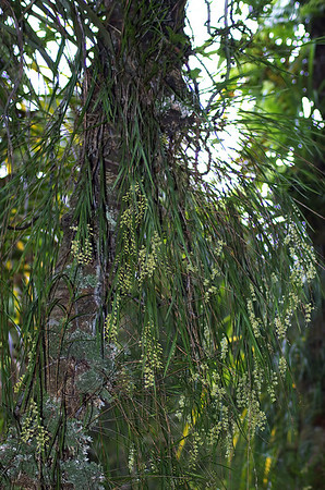 Cascade Kauri park Waitakere Ranges - Te Waonui a Tiriwa New Zealand - 1 Oct 2006