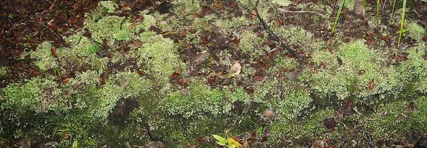 Ground moss Cascade Kauri park Waitakere Ranges - Te Waonui a Tiriwa New Zealand - 1 Oct 2006