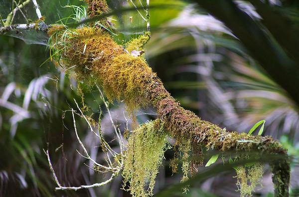 Moss Cascade Kauri park Waitakere Ranges - Te Waonui a Tiriwa New Zealand - 1 Oct 2006