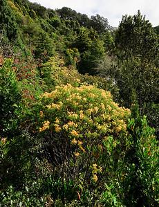 Eden Gardens Auckland