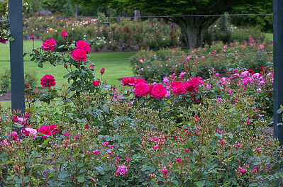 Rose gardens Hamilton Gardens Hamilton New Zealand - 4 Nov 2006