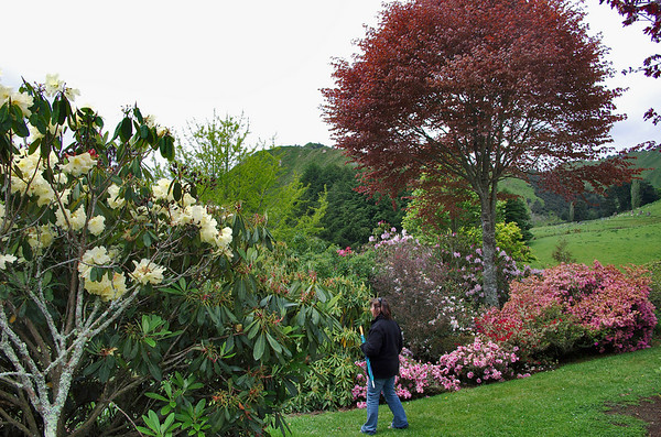 Gill at the Hopkirk's Gardens Taranaki New Zealand - 30 Oct 2006