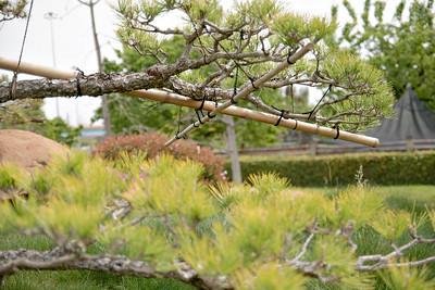 The Japanese Garden (Suiho En)