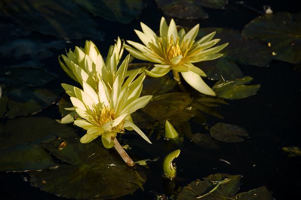 Ngatea Water Gardens Ngatea New Zealand - 6 May 2007