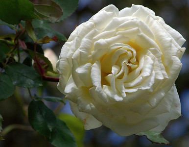 Parnell Rose Gardens Auckland New Zealand - 11 Nov 2006