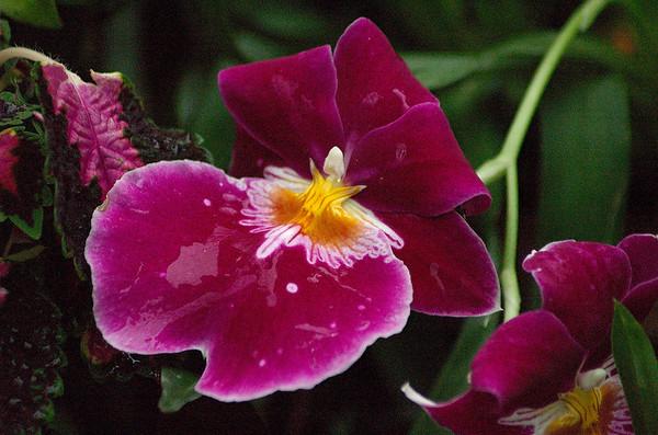 Orchid Fernery Pukekura Park New Plymouth New Zealand - 29 Oct 2006