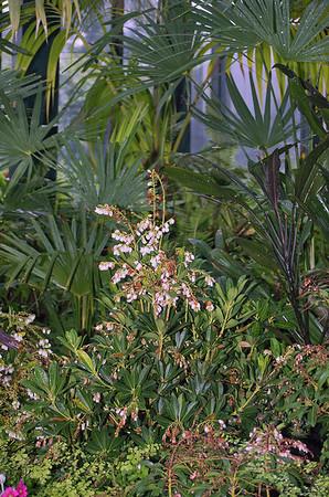 Fernery Pukekura Park New Plymouth New Zealand - 29 Oct 2006