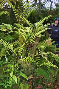 Ferns Fernery Pukekura Park New Plymouth New Zealand - 29 Oct 2006