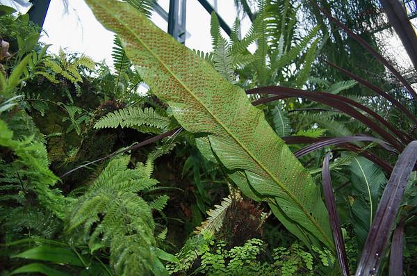 Fern spores Fernery Pukekura Park New Plymouth New Zealand - 29 Oct 2006