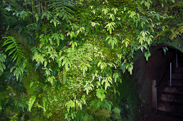 Ferns and moss Fernery Pukekura Park New Plymouth New Zealand - 29 Oct 2006