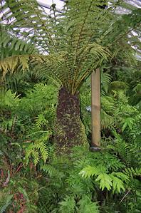 Fern tree Fernery Pukekura Park New Plymouth New Zealand - 29 Oct 2006