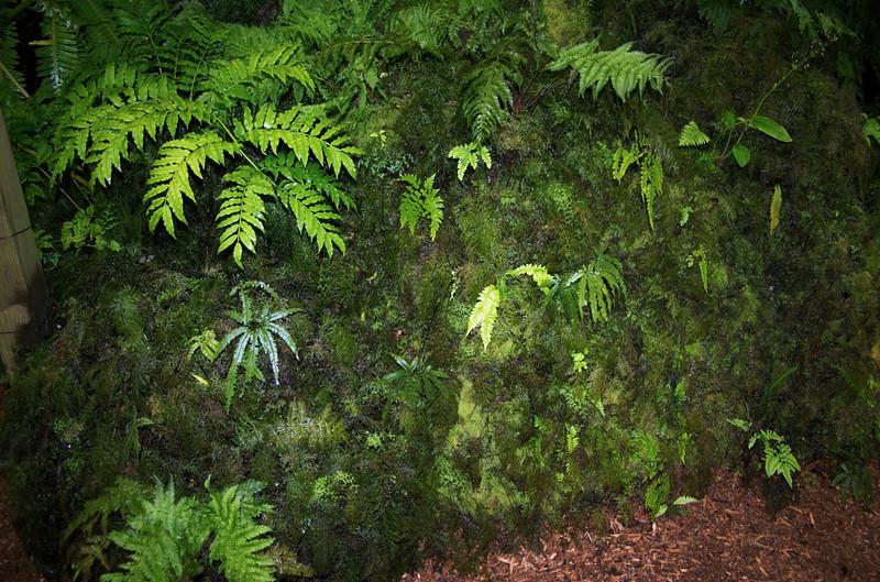 Moss Fernery Pukekura Park New Plymouth New Zealand - 29 Oct 2006