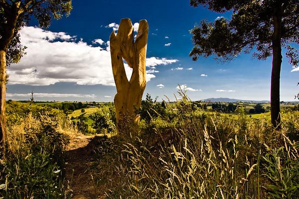 21 Ken Smith Looking to Pirongia Oak