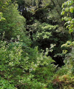 River gully Te Popo Gardens Taranaki New Zealnd - 30 Oct 2006