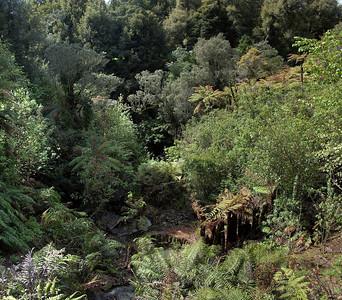 Te Popo Gardens Taranaki New Zealnd - 30 Oct 2006