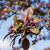 new spring leaves and blossom