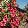flower basket,