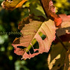 Half eaten leaf