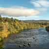 River Spey at Grantown on spey Highlands