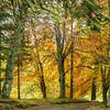 Autumn colours near Blairgowrie