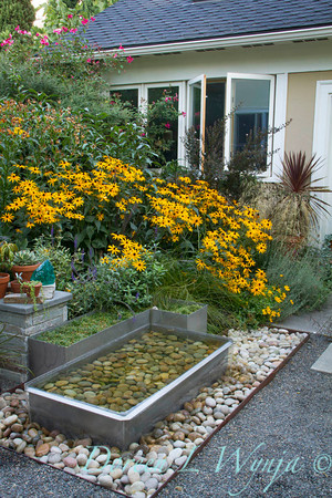 Rudbeckia Goldsturm Metal water feature_2093