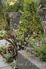 Linda Hannan's Garden_722