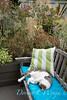 Linda Hannan's Garden_727