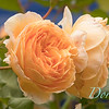 Ann Nickerson - Ann's garden_403