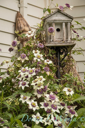 Marcia Peck - Marcia's garden_606