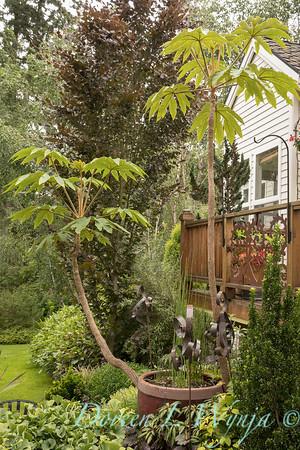 Marcia Peck - Marcia's garden_614