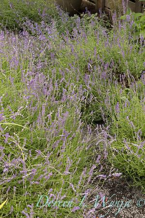 Marcia Peck - Schmitt garden_513