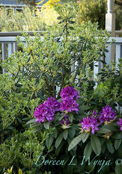 Garden at Argyle winery_1064