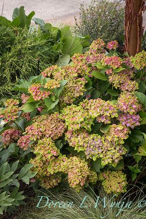 Helena's Garden_6603