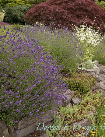 Amy Whitworth - Debolock garden_301