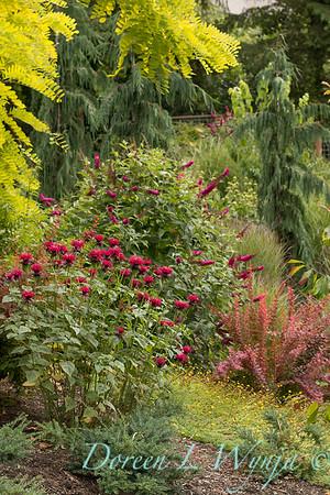 Lucy & Susan - Letson garden_719