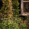 Plantswoman Design - Issaquah Landscaping_1096