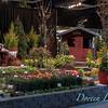 Dakara Landscape Design_1115